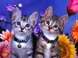 most beautiful wallpapers for facebook. Fine Beautiful Beautiful Cat Wallpapers For Facebook To Most 6