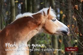 Pferde Wissen Genau Pferdeliebe Das Magazin