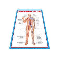 Wall Chart Of Human Anatomy China Human Anatomy Wall Chart Manufacturers Suppliers