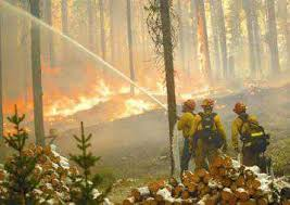 Can Fuel Treatments Mitigate Wildfire Effects Research Highlights