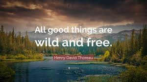 "Thoreau Quotes Inspiration Henry David Thoreau Quote ""All Good Things Are Wild And Free"" 48"