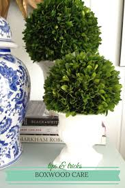 Boxwood Care - How to care for preserved and fresh boxwood. Will need this  for my preserved boxwood topiaries!