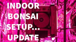Growing Bonsai Under Led Lights Indoor Bonsai Setup Update Plant Photonics Led Light