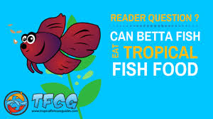 What Do Betta Fish Eat Only Use These 5 Best Types Of Betta