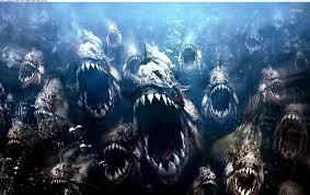Image result for piranhas