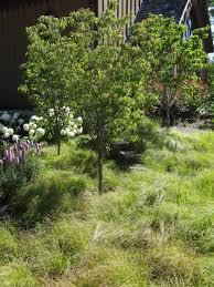 Practical Permaculture U2013 Planting Under Fruit Trees U2013 Part 2 Underplanting Fruit Trees