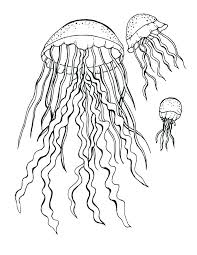 jellyfish coloring pages um size of coloring book and pages jellyfish coloring page pages to