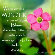 Buddha Weisheiten Und Zitate
