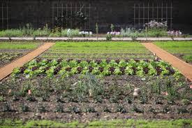 Kitchen Garden Farm Historic Royal Palaces The Kitchen Garden At Hampton Court Palace