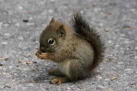 Image result for happy squirrel