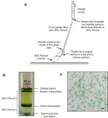 Yes, the tube has protease inhibitors included, so they dissolve immediately in the blood while it is being drawn. Methodology An Optimized High Yield Tomato Leaf Chloroplast Isolation And Stroma Extraction Protocol For Proteomics Analyses And Identification Of Chloroplast Co Localizing Proteins Plant Methods Full Text