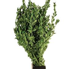 Preserving Tree Branches For Decoration Decorating Dried Preserved Boxwood Branches For Inspiring Home