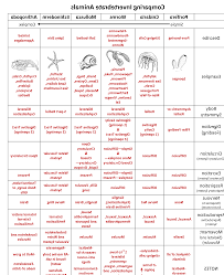Animal Phyla Comparison Chart Animal Phyla Comparison Chart Related Keywords Suggestions