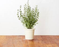 c g smart herb garden refill thyme 3 pack