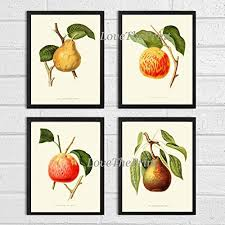 >amazon apple pear fruit print set of 4 wall art antique  apple pear fruit print set of 4 wall art antique beautiful botanical plants garden nature home