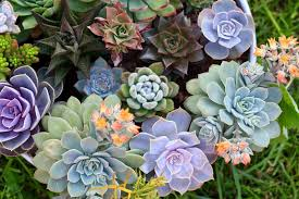 11 best easy care exotic succulents to