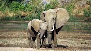Elephant Wallpapers Desktop - Wallpaper ...