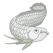 観賞魚のイラストアロワナ 無料イラスト素材素材ラボ
