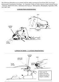 Veterinary Radiology Positioning Chart Veterinary Radiology Positioning Chart Best Photos Of