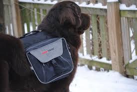 ezy dog backpack