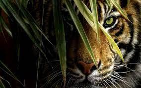 Tiger HD Wallpapers For Desktop Group (90+)