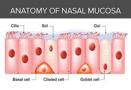 Snot | A Closer Look at Nasal Mucus | Integrative Therapeutics