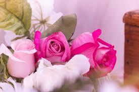 hd wallpaper pink flowers nature