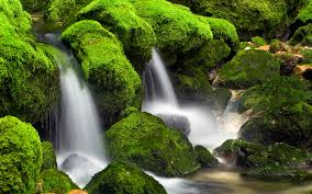 nature wallpapers high resolution green. Interesting Nature High Quality Green Nature Wallpaper With Nature Wallpapers High Resolution Green L