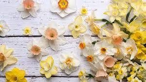 Small Picture Flower Power Inside Garden Design Magazine Subscription Discount