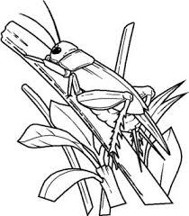 Small Picture 18 best Grasshopper Coloring Pages images on Pinterest Coloring