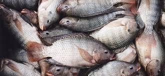 Image result for Governo da Guiné-Bissau inaugura Laboratório Nacional de Pescado