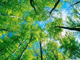 Green Forest Desktop Laptop Wallpapers ...