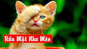 Rửa mặt như Mèo - Nhạc thiếu nhi. Bài hát: Rửa Mặt Như Mèo - Xuân Mai -  Children's Music - YouTube