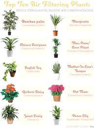 types of indoor plants common indoor plants in singapore