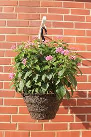 Lantana Hanging Basket