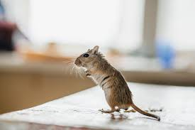 here s how to keep mice out of your kitchen