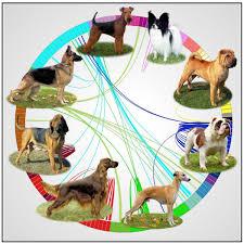 Canine Evolution Chart Old Dog New Dog Genetic Map Tracks The Evolution Of Mans