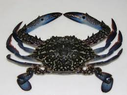 Crab Species Chart Different Types Of Crab With Pictures Owlcation
