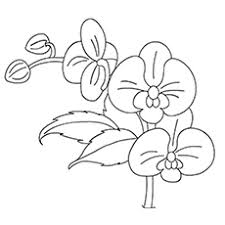 ✓ free for commercial use ✓ high quality images. Top 47 Free Printable Flowers Coloring Pages Online