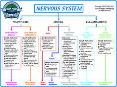 21 Best Nervous System Diagram For Kids Images Nervous