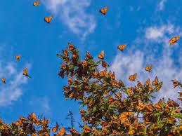 Aesthetic Wallpaper Pc Butterfly ...