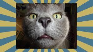 Lustige Katzen Bilder Lustigsten Katzen Beste 2016 Youtube