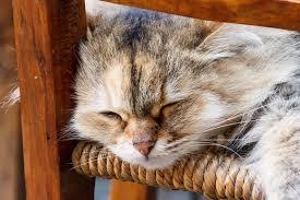 Die Schönsten Katzenzitate Dieser Welt Watson