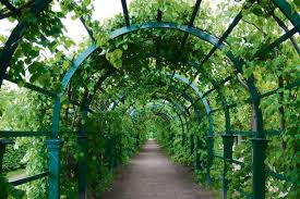 pergolas arches and arbours can all be clothed with climbing plants