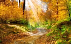 Výsledek obrázku pro obrázek příroda podzim