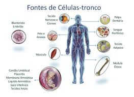 Resultado de imagem para celulas tronco fotos
