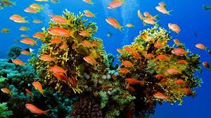 Природа растения и животные морей и океанов Животный мир морей и океанов