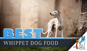 9 Best Whippet Dog Foods Plus Top Brands For Puppies Seniors