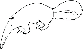 Baby Ferret Coloring Pages Baby Fish Coloring Pages Ferret Of