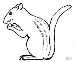 Small Picture Chipmunks coloring pages Free Coloring Pages